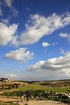Israel, Menashe' Heights. Hiking from road 672 towards Ein Ha'emek