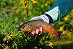 CHILE FLY FISHING