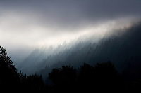 Fine art landscape of an image in grey tones of dawn light breaking through mist over forests of pine trees, creating silhouette of pine trees in foreground, along the Columbia River Gorge, northern Oregon, U.S.A.