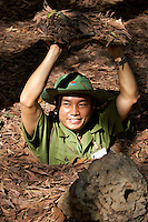 Cu Chi underground tunnels, used by the Viet Cong during the Vietnam War. A tourist guide demonstrates how a tunnel entrance was camouflaged with leaves or a fake termite mould.