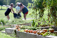 NWA Democrat-Gazette/DAVID GOTTSCHALK Fresh vegetables are visible as Sarah Boyd (from left), garden volunteer coordinator, works Wednesday, July 10, 2019, with Pippi Suel, 11 and Meranda (cq) Bowlin, as they clear the last weeds and grass from the Tyson Edible Garden at John Tyson Elementary School in Springdale. Neighbors and families are encouraged to harvest the ripe vegetables from the garden that was established in 2015.