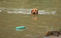 FAO JANET TOMLINSON, DAILY MAIL PICTURE DESK<br /> Pictured: A dog is trained in the farm pond Wednesday 23 November 2016<br /> Re: The Dog House in the village of Talog, Carmarthenshire, Wales, UK