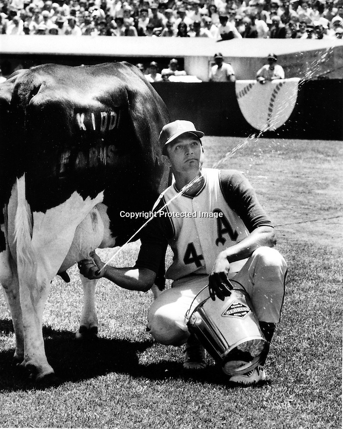 Oakland A's catcher Phil Roof squirts milk during a cow milking contest before Athletics home game. <br />
