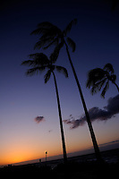 Coconut Palm trees on beach in silhouette at sunset. Kona, Big Island, Hawaii