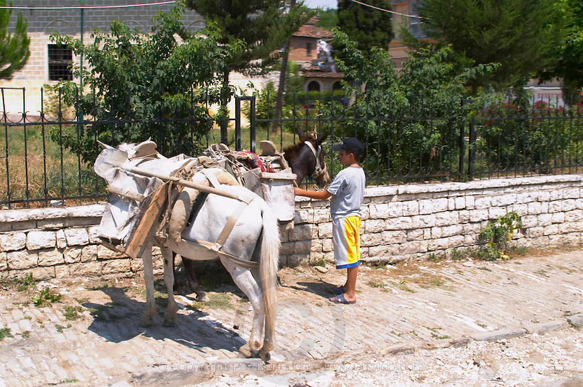 A boy with to donkeys asses harnessed with tools and saddlebags on a street in the lower modern part of the village. Berat lower town. Albania, Balkan, Europe.