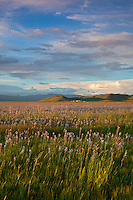 Camas County, Idaho<br /> Centennial Marsh Camas Prairie<br /> Evening clouds over camas praire and distant hills