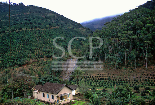 Espirito Santo State, Brazil.  Part of rainforest removed to build a house and for plantation.