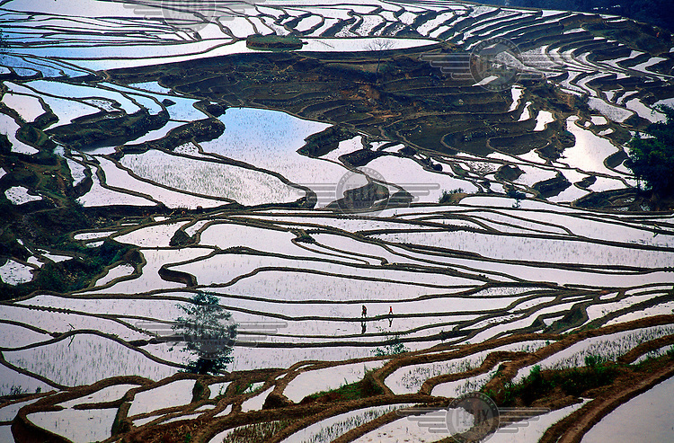 Ancient rice terraces, farmed by the Dai minority, carved out of the hills at a height of 2,000 metres..