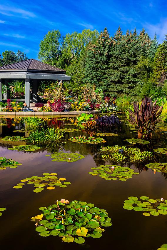 Water lilies, Monet Pool, Denver Botanic Gardens, Denver, Colorado USA.