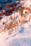 USA, Utah, Bryce Canyon City, Bryce Canyon National Park, detail of snow and vegetation, Sunrise Point