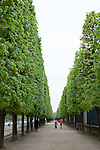 Row of trees in Tuileries Gardens (Jardin des Tuileries) in spring, Paris, France, Europe