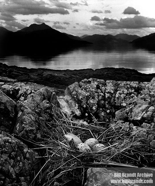 Gull's Nest Skye 1947