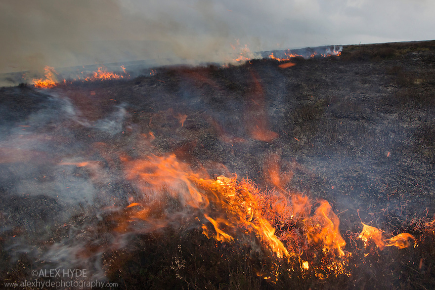 Controlled burning of heather moorland, Derwent Edge, Peak District National Park, Derbyshire, UK. March 2015.
