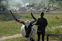 Afrika SUED-SUDAN  Bahr el Ghazal region , Lakes State, Dorf Yeri, Dinka mit Zeburindern im cattle camp bei Rumbek | <br />