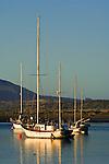 Sailboats anchored in Morro Bay, California