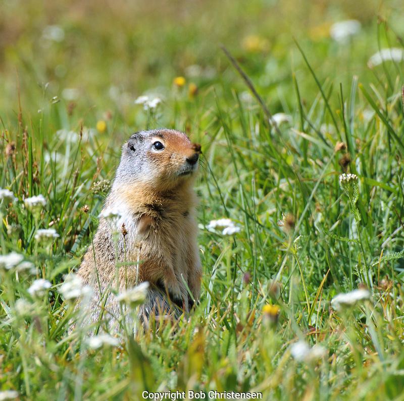 Small Animal Photos
