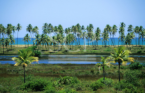 Salvador, Brazil. Arembepe; green palm fringed lagoon with the sea behind.