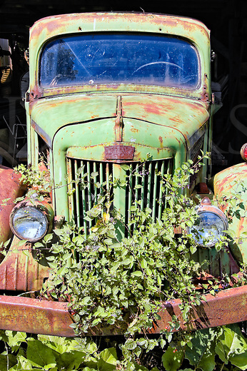 This old green pickup had weathered wonderfully, and the summer poison ivy had ripened to the same shade of green in the August heat. I worked the camera position to one side and then the other, but this head on view worked best. The background is dark because it was parked halfway out into the sun from a funky old shed that had roughly the same amount of wear. I like the weathered green against the deep black with a little rust thrown in, the windshield is a little blue-black, and there is simply no telling how long ago someone turned the key to off for the last time. This truck might easily fit into a Stephen King novel!<br /> <br /> I tried to read the front emblem for the manufacturer's name, but couldn't make it out. Later on, an old truck enthusiast told me that it is a White truck, but all he could say was &ldquo;forties&rdquo; for the age.