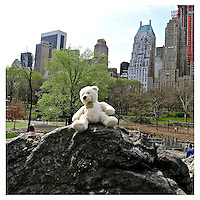 NEW YORK, NY - MARCH 23: Teddy Bear on Central Park rocks with Essex House in the background in New York, New York on March 23, 2012. Photo Credit: Thomas R Pryor