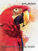 Alfredo, REALISTIC ANIMALS, REALISTISCHE TIERE, ANIMALES REALISTICOS, paintings+++++,BRTOXX10485,#a#, EVERYDAY ,parrot,parrots