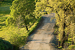 A country road through the oak-covered hills in the spring, Amador County, Calif.