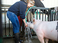 "Natalie Ehli, 16, from Sumner High School gives her pig, Howard, a drink during it's bath prior to the Northwest Junior Livestock Show at the Washington State Spring Fair in Puyallup, Washington on April 17, 2015. Ehli is a FFA student and says ""I like the leadership role. You take care of your pig. I love to be around animals because I want to be a vet someday."" Howard was born on Oct. 19, 2014 and Ehli got him on December 1st. Ehli's mother, Cassie Ehli, was also in FFA when she was in high school."