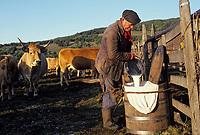 "Europe/France/Auvergne/12/Aveyron/Env. de Laguiole : Traite des vaches au buron de canut pour préparation la ""fourme da Laguiole"" [Non destiné à un usage publicitaire - Not intended for an advertising use] (<br /> PHOTO D'ARCHIVES // ARCHIVAL IMAGES<br /> FRANCE 1980"
