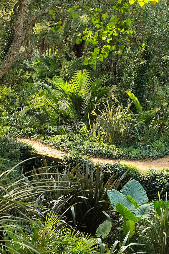 Domaine du Rayol en novembre : le jardin de Nouvelle-Zélande, dans le vallon le long du ruisseau pousse des palmiers de Nikau ou palmiers blaireau (Rhopalostylis sapida) du lin de Nouvelle-Zélande (Phormium tenax) et Alocasia.