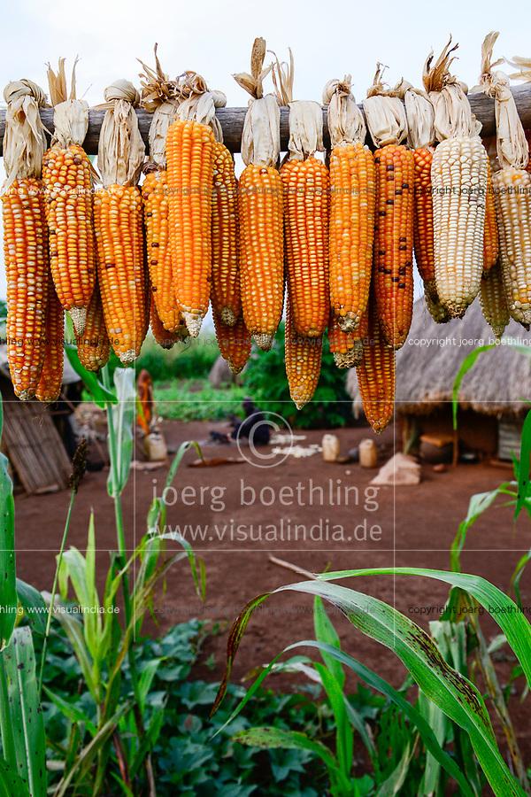 ETHIOPIA, Gambela, village Gog Dipach, maize for the next seeding / AETHIOPIEN, Gambela, Dorf GOG DIPACH der Ethnie ANUAK, Maisernte, Mais fuer die naechste Aussaat