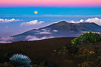 Silversword and full moon in a magenta colored evening light in HALEAKALA NATIONAL PARK on Maui in Hawaii