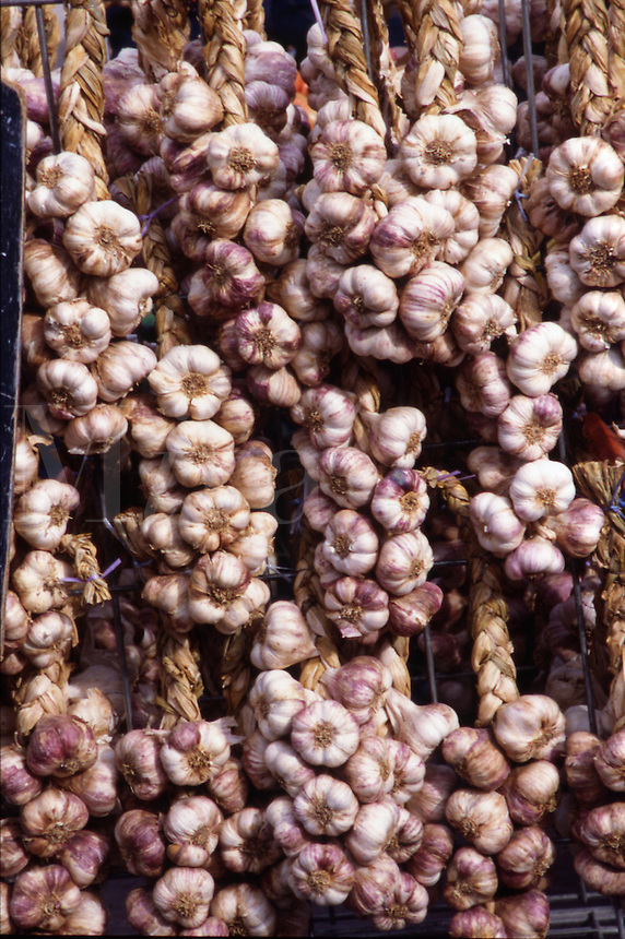 Fresh garlic ristras a market, Provence, France