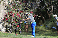 Pater Uihlein (USA) needs assistance from a referee as his ball has landed in a tree on the 1st during Round 1 of the ISPS HANDA Perth International at the Lake Karrinyup Country Club on Thursday 23rd October 2014.<br /> Picture:  Thos Caffrey / www.golffile.ie