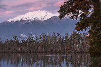 Sunset at Lake Wahapo near Whataroa with kahikatea grove and Mt. Adams in background, Westland Tai Poutini National Park, UNESCO World Heritage Area, West Coast, New Zealand, NZ