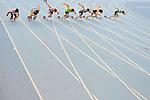 8 giugno 2013 - XIX Meeting internazionale di Torino - XIV Memorial Primo Nebiolo<br /> 8th June 2013 - XIX Turin International Track and Field meeting - XIV Memorial Primo Nebiolo