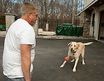 BETHANY,  CT-122816JS07--Marc Gerte plays with his 5-year-old Yellow Lab Jamie Lee on Wednesday. Gerte recently won a court battle alleging that was dog was taken by the Naugatuck Police and given away. <br /> Jim Shannon Republican-American