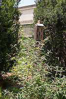 Attracting butterflies to the yard with butterfly bush Buddleja davidii and a butterfly house with vertical slits