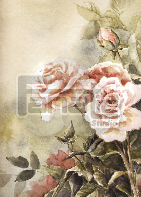 Illustration of beautiful rose plant