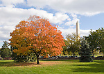 Washington DC; USA: Fall color in Washington DC, with red maple tree between White House and Washington Monument.Photo copyright Lee Foster Photo # 31-washdc75627