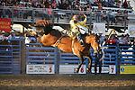 2013 Cody Wyoming PRCA