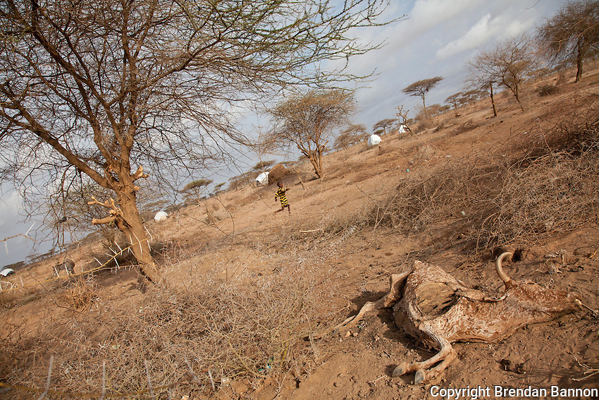 A dead cow at the edge of Dadaab refugee camp in northern Kenya. Many nomads in Somalia have lost all of their cattle to drought and have fled in large numbers to Dadaab refugee camp
