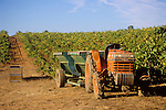 1992 Kubota L3650 tractor with trailer bins in vineyard, Shenandoah Valley, Calif.