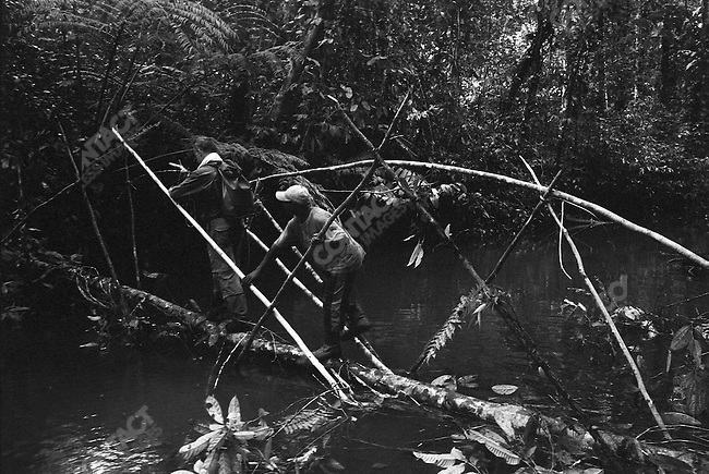 The &quot;First Contact&quot; tour group crosses a makeshift bridge,<br />West Papua, Indonesia, September 2004.