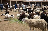Rissani, Morocco.  Sheep for Sale in the Livestock Market.