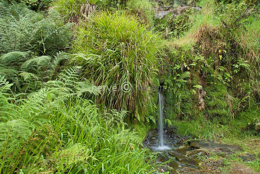 France, Bretagne, Parc du Château de Trévarez, petite cascade et ambiance sauvage // France, Brittany, Park of the Castle of Trévarez, girl waterfall and wild atmosphere