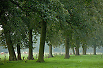 Europa, DEU, Deutschland, Nordrhein Westfalen, NRW, Rheinland, Niederrhein, Leuth, Naturpark Schwalm-Nette, Gruenland, Baeume, Kategorien und Themen, Natur, Umwelt, Landschaft, Jahreszeiten, Stimmungen, Landschaftsfotografie, Landschaften, Landschaftsphoto, Landschaftsphotographie, ....[Fuer die Nutzung gelten die jeweils gueltigen Allgemeinen Liefer-und Geschaeftsbedingungen. Nutzung nur gegen Verwendungsmeldung und Nachweis. Download der AGB unter http://www.image-box.com oder werden auf Anfrage zugesendet. Freigabe ist vorher erforderlich. Jede Nutzung des Fotos ist honorarpflichtig gemaess derzeit gueltiger MFM Liste - Kontakt, Uwe Schmid-Fotografie, Duisburg, Tel. (+49).2065.677997, archiv@image-box.com, www.image-box.com]