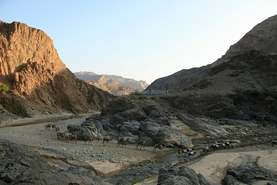 The caravans follow the canyon of the Saba river leading to Berahile, the main market town for the Afars..