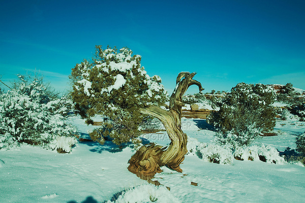 View of Dead Horse Point with snow, Dead Horse Point State Park, Utah, USA