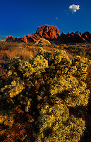 792980041 stunning sandstone formations and and desert jumping cholla cactus under abrilliant blue sky in valley of fire state park nevada