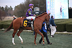 20 February 2009: Cool Bullet before  The Southwest at Oaklawn in Hot Springs, Arkansas