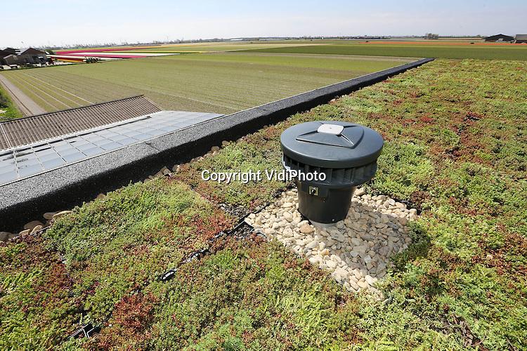 Foto: VidiPhoto..BREEZAND - Het meest groene dak in de kop van Noord-Holland. Een accountantskantoor in Breezand krijg woensdag een compleet groene dakbedekking met planten. Voordelen hiervan zijn minder slijtage van de dakbedekking en betere isolatie tegen de warmte en kou..